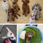 三鷹市・武蔵野市 犬の保育園&ホテル・デイケア vowbee blue (ばうびー ぶるー) 犬のしつけ・ドッグトレーニング
