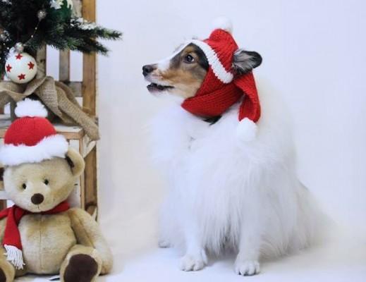 シェルティーとクリスマスツリー