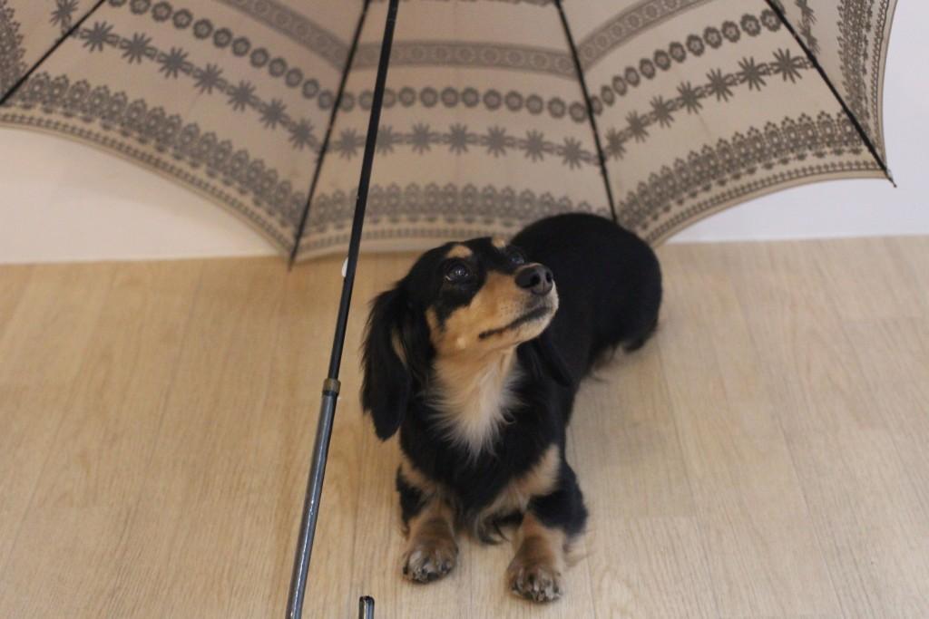 発泡スチロールと傘☆