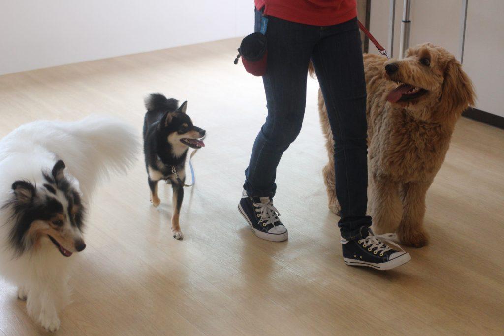 犬の幼稚園 楽しいレッスン みんなで歩行練習 吉祥寺