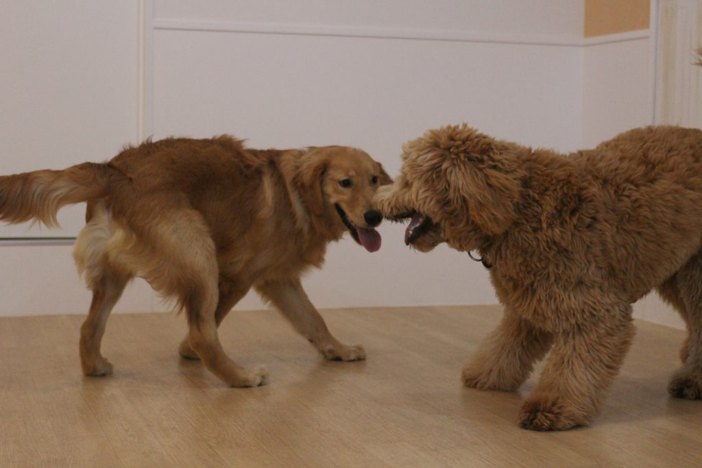 大型犬と小型犬♪