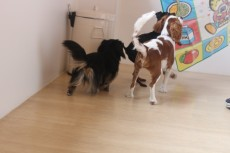 犬の保育園 ブランケット レッスン 犬のお友達 トレーニング