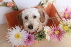 犬の保育園 可愛い 犬の幼稚園 吉祥寺 都内