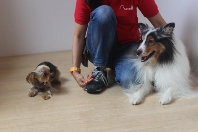 犬の幼稚園 ヨークシャテリアのチップくん 仲良しレッスン 犬の社会化