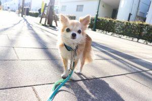 お散歩日和♡