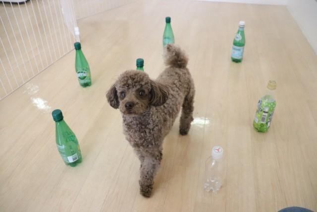 ペットボトルに囲まれて…