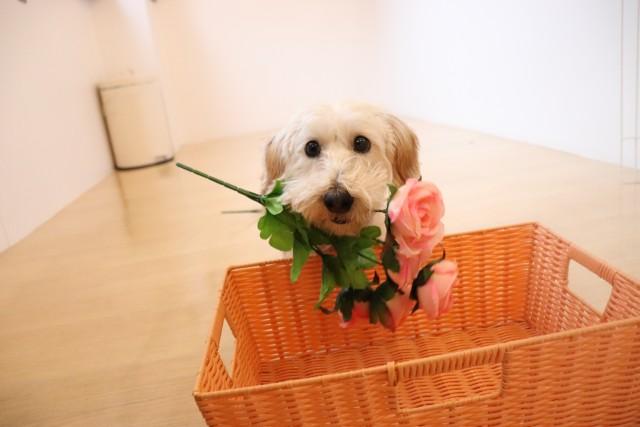 お花を咥えて…