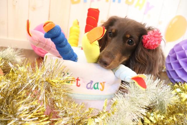 Happy BirthDay!♡