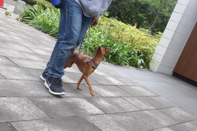 お散歩~!