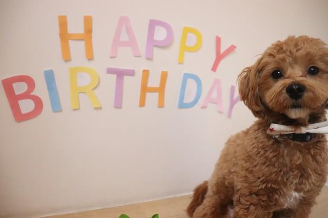 お誕生日おめでとう♡