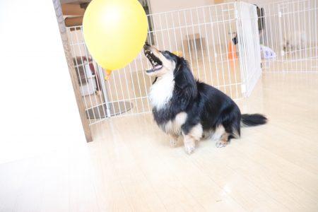 風船でパス練習!!!