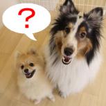 通園している犬は何歳ぐらいが多いですか?