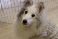 犬の保育園 コース料金