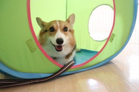 初めてのテント♪