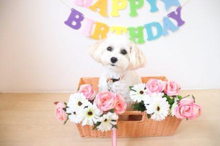 HAPPY♡BIRTHDAY