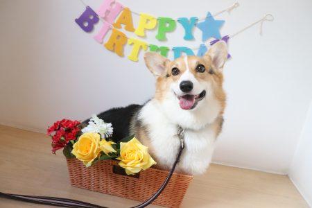 🎉お誕生日おめでとう🎉