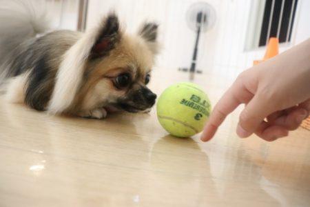 ボールを転がそう!!!