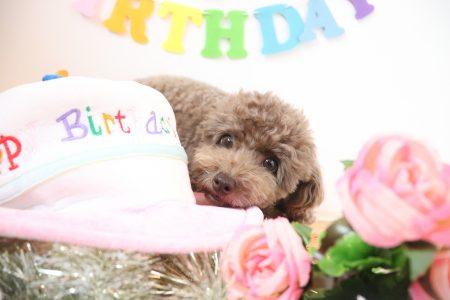 お誕生日おめでとう🎁